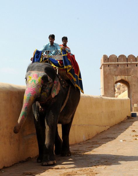 elephantreturnsfromamber