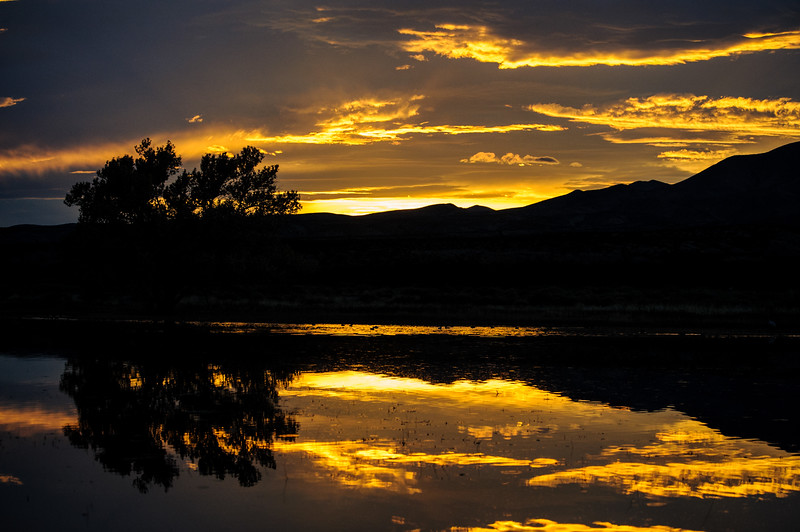 20111124 Bosque del Apache 489.jpg