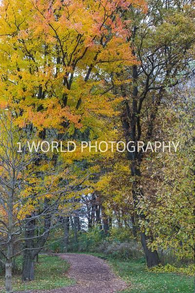 Morton Arboretum Fall Trail.jpg