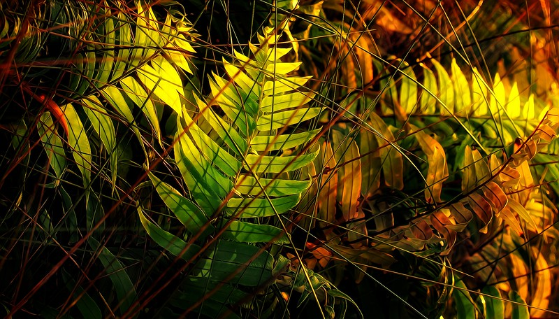 Ferns by Ray Bilcliff - www.trueportraits.com