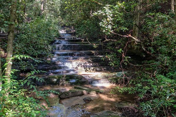 Panther - Angel Falls