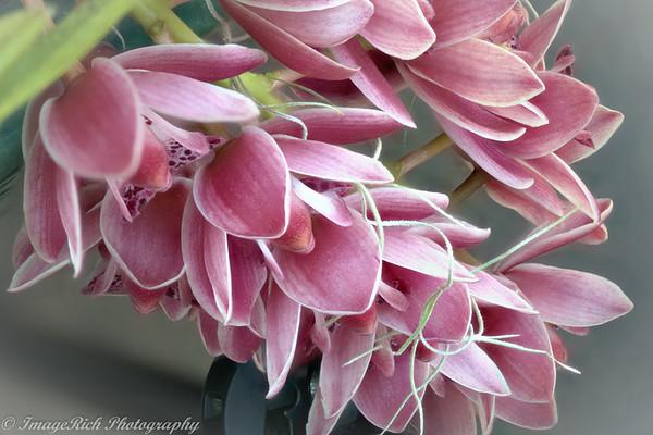 Daniel Stowe Orchid Festival