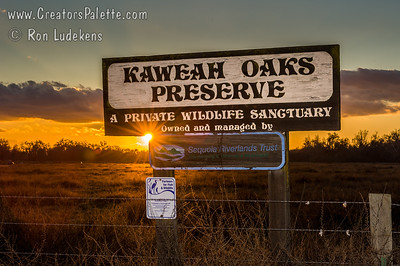Kaweah Oaks Preserve just East of Visalia, CA