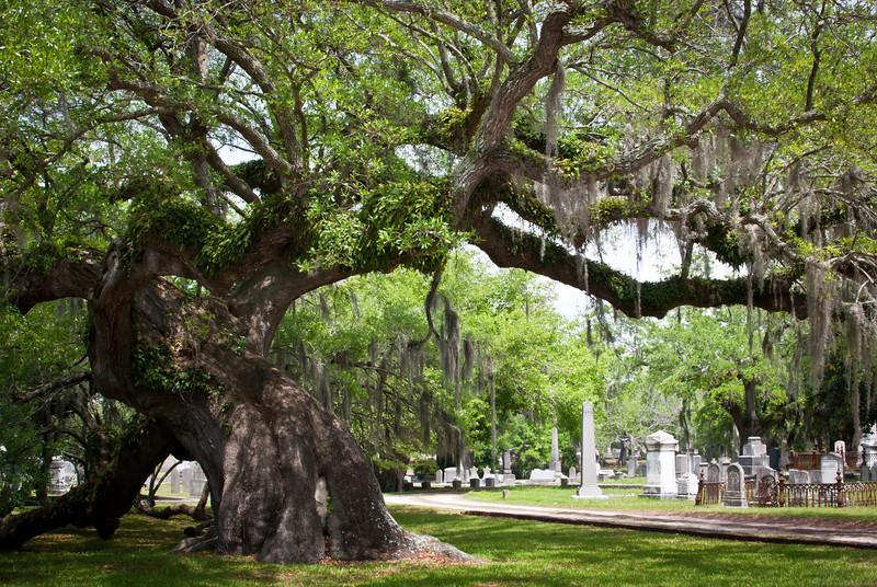 Charleston 201304 Magnolia Cemetery (8).jpg