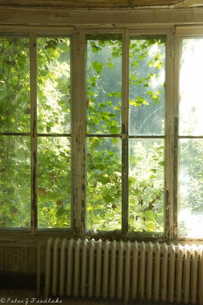 Forest Glen color