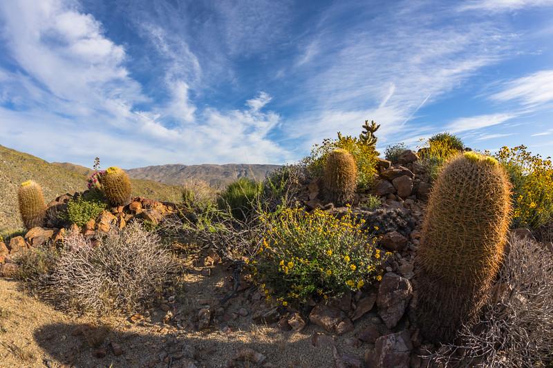 It's another Anza-Borrego Desert Sunrise