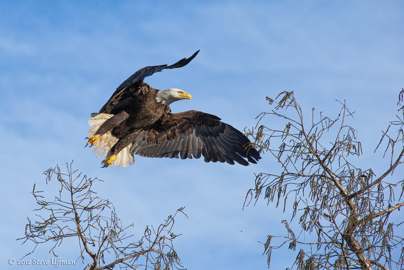 20130227-_G7Q8939cc lockwood eagle shoot-Edit.jpg