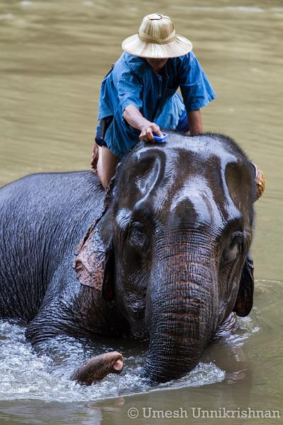 Thailand - Chiang Dao elephant training center 3404.jpg