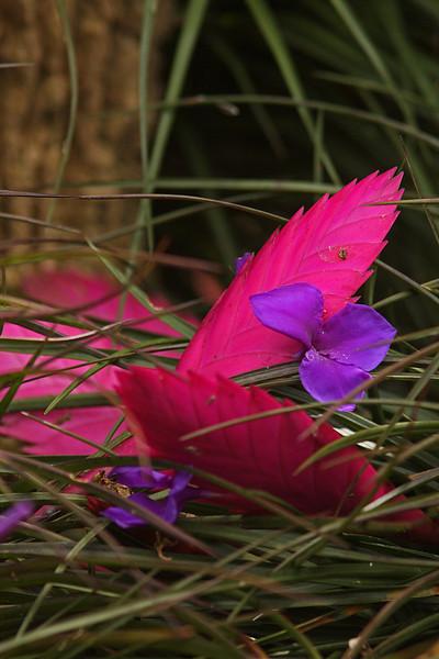 WB~Pinkandpurple Ti plants1280.jpg