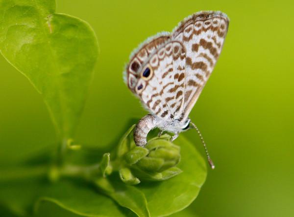 Butterflies + caterpillars