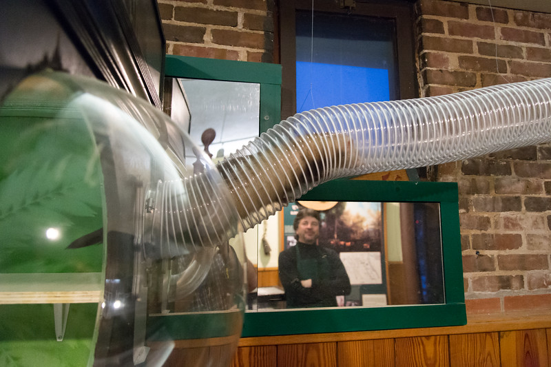 02/01/19  Wesley Bunnell | Staff  A ferret makes his way though suspended plastic tubing at the New Britain Youth Museum at Hungerford Park. as New Executive Director Tom Pascocello looks on.  Pascocello has updated many of the museum's exhibits since taking over.