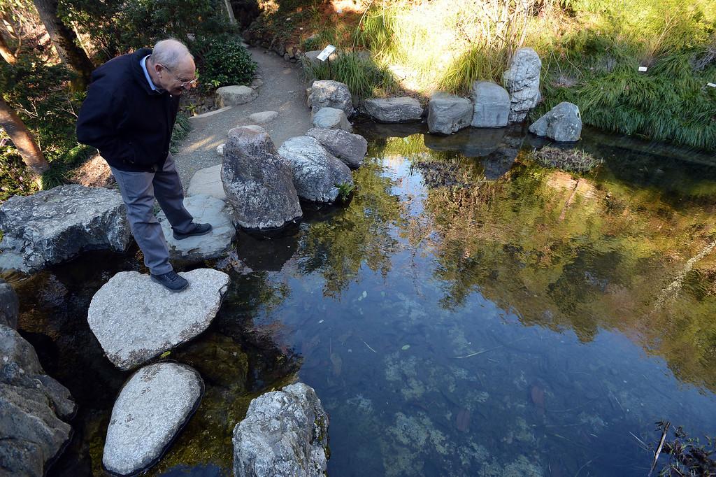 . Garden Director Paul Licht looks for newts at the University of California Botanical Garden in Berkeley, Calif. on Monday, Feb. 11, 2013. (Kristopher Skinner/Staff)