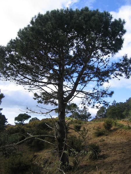 tall_tree.jpg