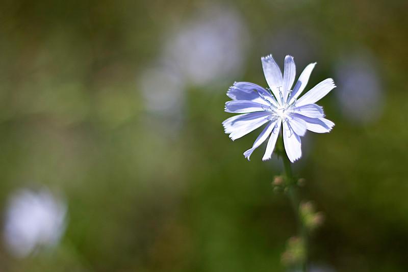 20110724_Flower2.jpg