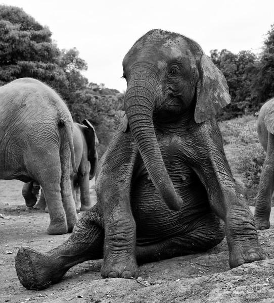 Augd31201x3_naxirobi_blixen_elephant_2352.jpg