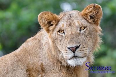 Serengeti Mara