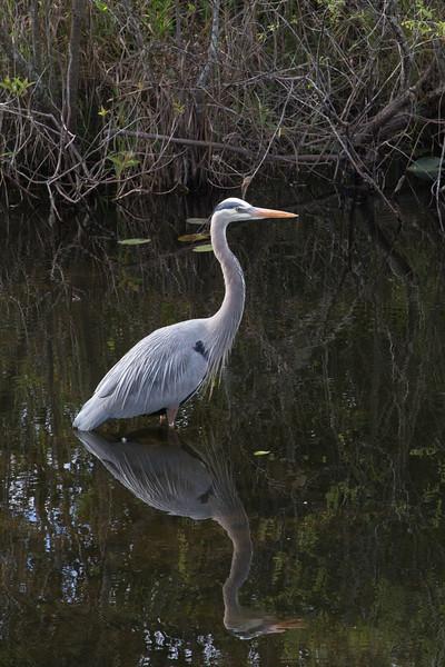 Everglades NP-0371-Select_E.jpg