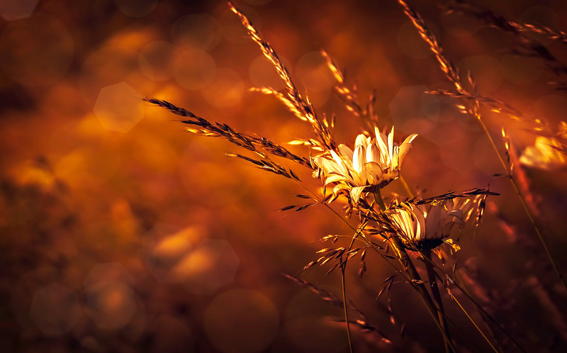 The Magic of Light-096.jpg