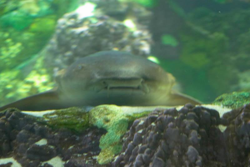 SeaWorld-005.jpg