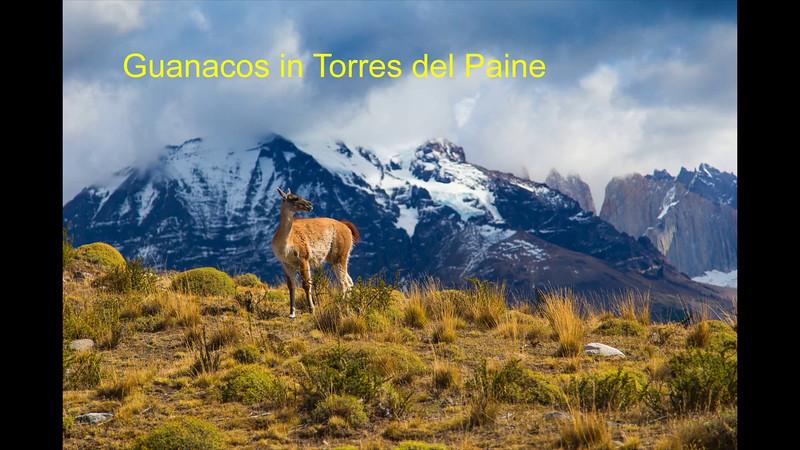 Fauna in Patagonia.mp4