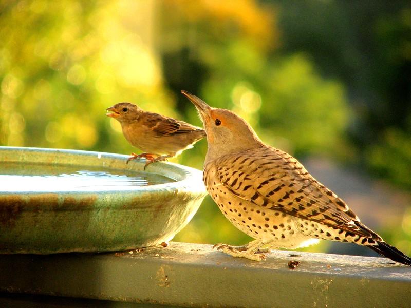 birds (153).jpg