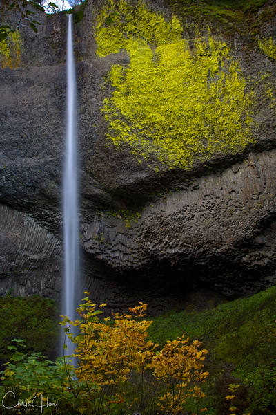 Latourell Falls, Columbia Gorge, Oregon