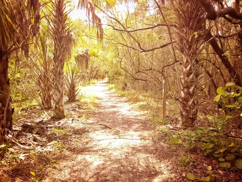IMG_Florida (6).jpeg