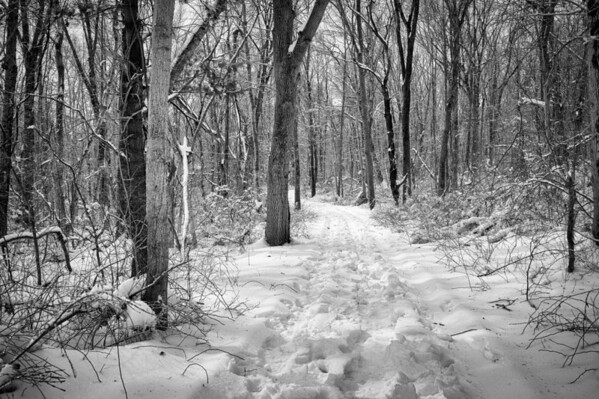 A Walk in the Snowy Woods