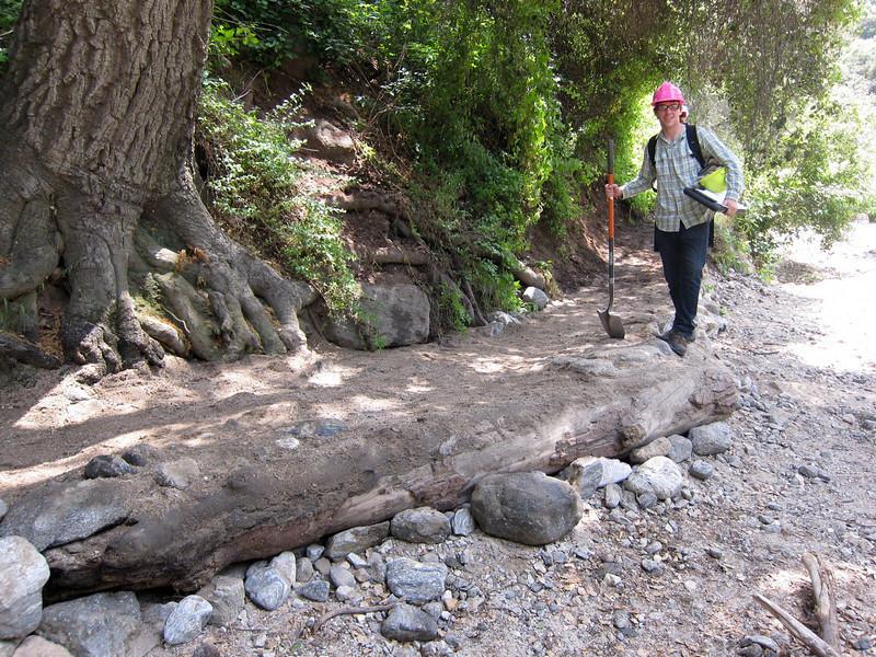 20110507015-El Prieto Trailwork.JPG