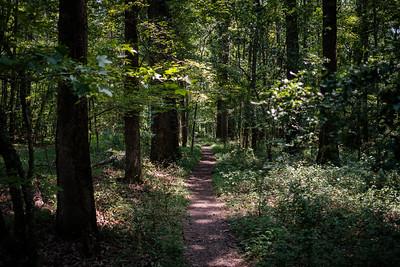 07-24-2021-Walk