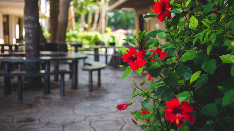 Flowers bloom in the seating area outside Starbucks