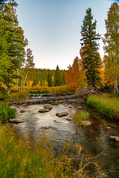 Duck Creek and the Aspen in Fall
