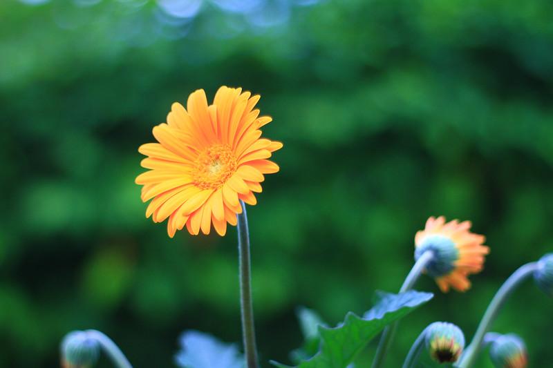 debbies flowers 2019-1315-2.jpg
