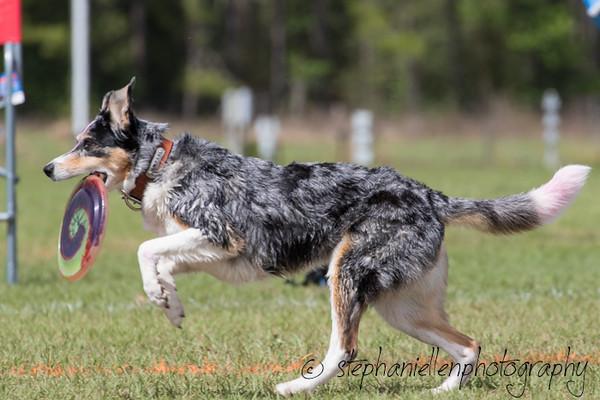 _MG_3034Up_dog_International_2016_StephaniellenPhotography.jpg