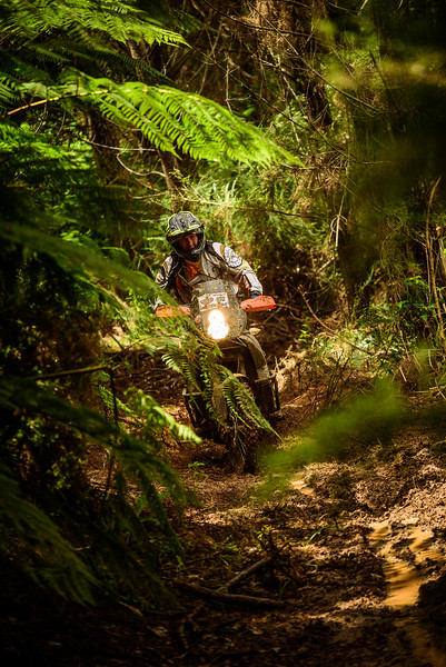 2018 KTM New Zealand Adventure Rallye - Northland (771).jpg