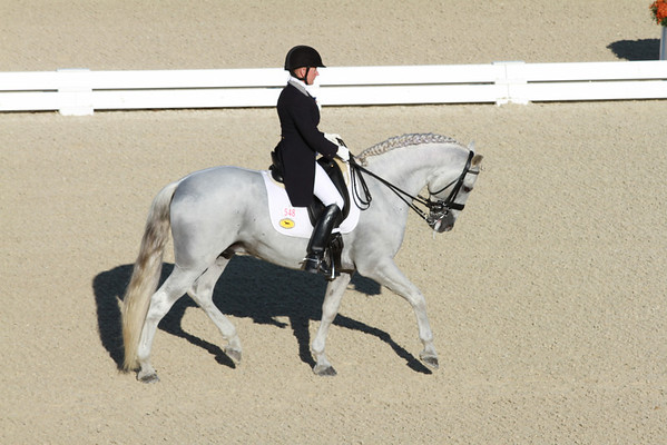 GranPrix Dressage White Lippizan