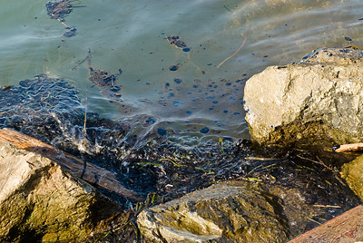 Bay Oil Spill Nov. 2007
