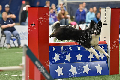 LARGE DOGS Sunday Standard (Round 5)