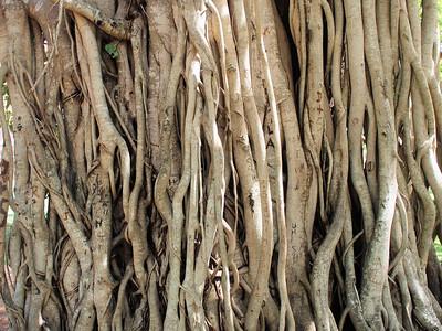 Trees of Sri Lanka