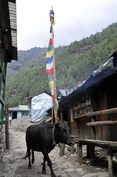 080516 2709 Nepal - Everest Region - 7 days 120 kms trek to 5000 meters _E _I ~R ~L.JPG