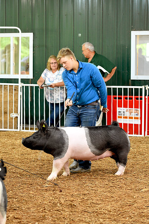 Swine Market Show 8-11-2021