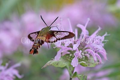 Legacy Prairie - Niagara Parks Botanical Gardens