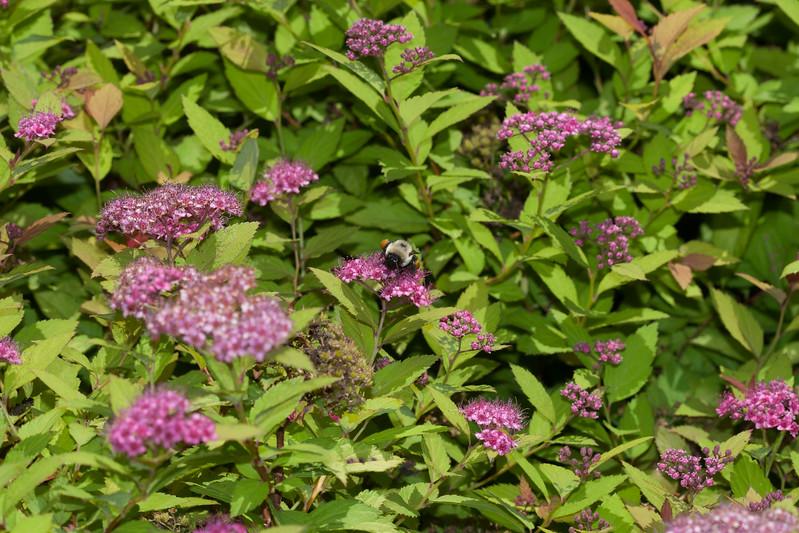 2009 06 30_NY Botanical Gardens_0769.jpg