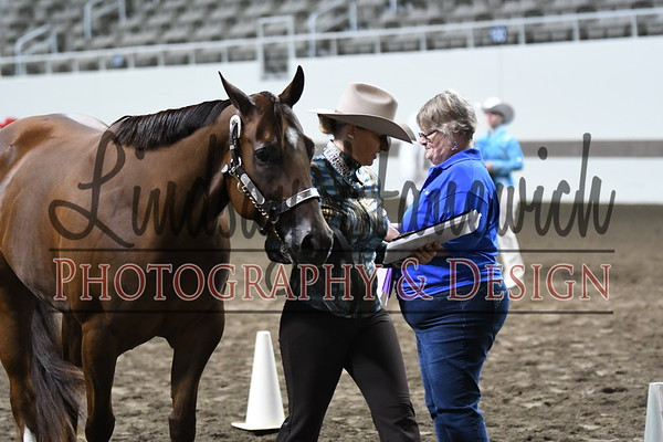 """Western Type Mare over 56"""" - Thursday"""