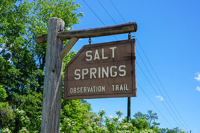 Salt Springs Observation Trail