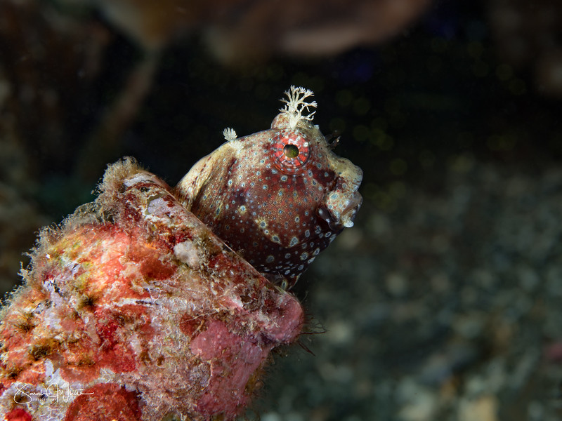 Lembeh_12Dec17_1405-Edit.jpg