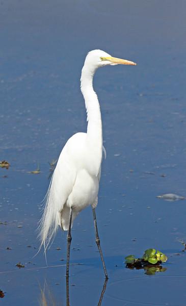 -Florida 2012-mostly birds
