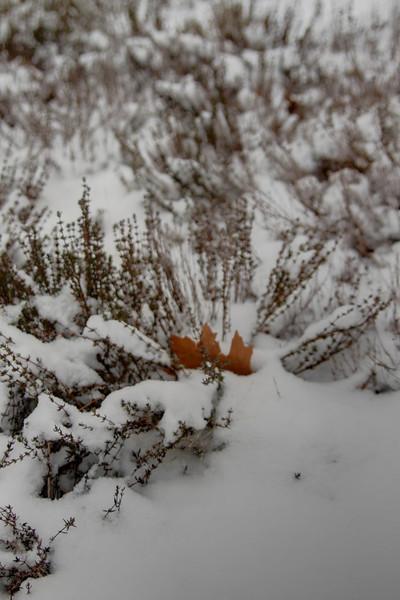 Easy Pickins Winter 025-1676780231-O.jpg