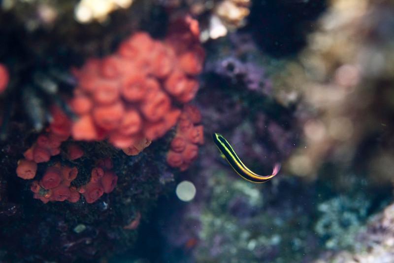20090414_Underwater_Mexico_0050.jpg