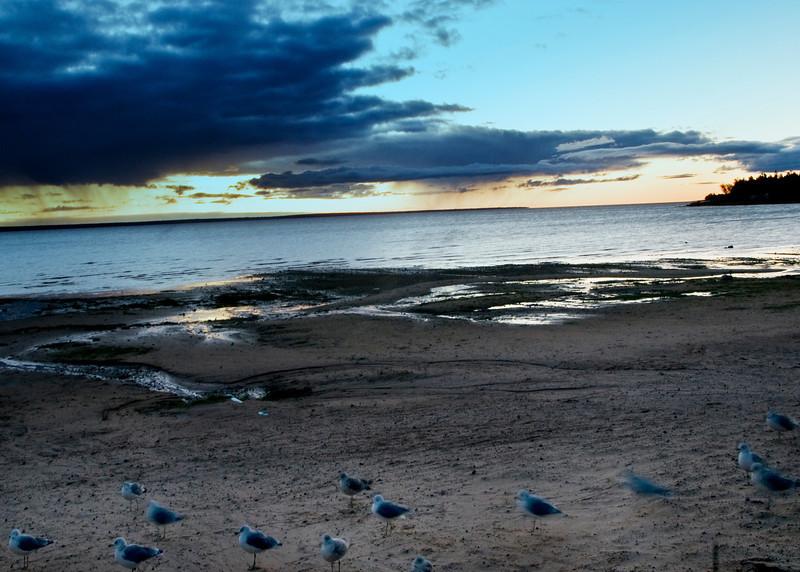 Sea Gulls on the beach Mackinac Island  - Copy.jpg